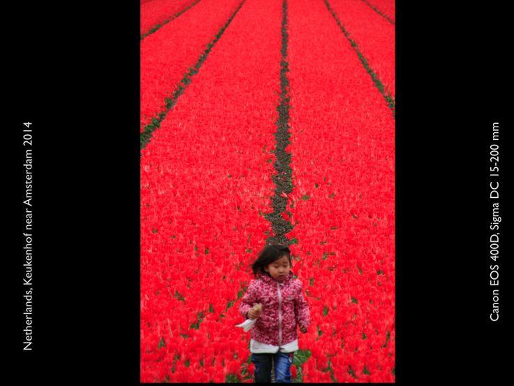 Tulips in Keukenhof;  Canon EOS 400 D