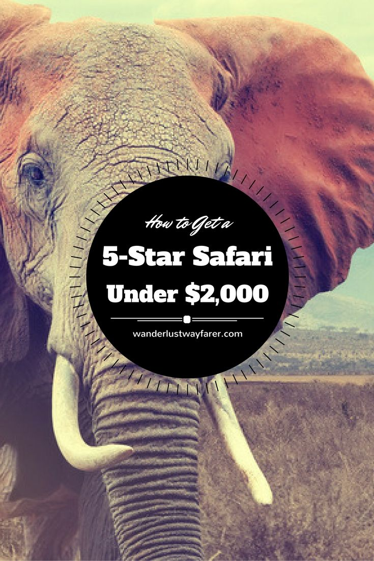 So you want to go on a luxury African safari, but you don't have a lot of money. Anything is possible if you follow my simple five-star safari planning tips.