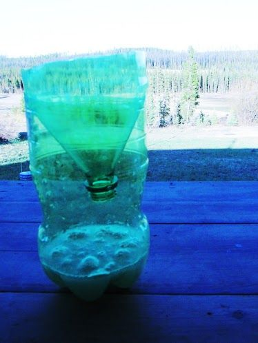 mosquito trapper using sugar and yeast essay There are all manner of sprays you can use to keep bugs under control, but the plastic bottle mosquito trap is an environmentally friendly alternative you should have the most of the.