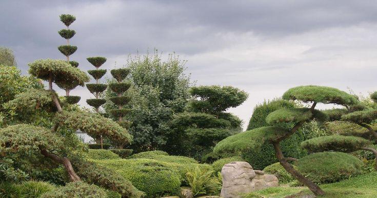 Gestaltungstipps für Japanische Gärten - Mein schöner Garten