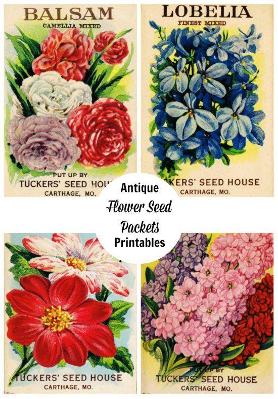 Gratis printbare antieke bloemzaden pakketten - KnickofTime.net