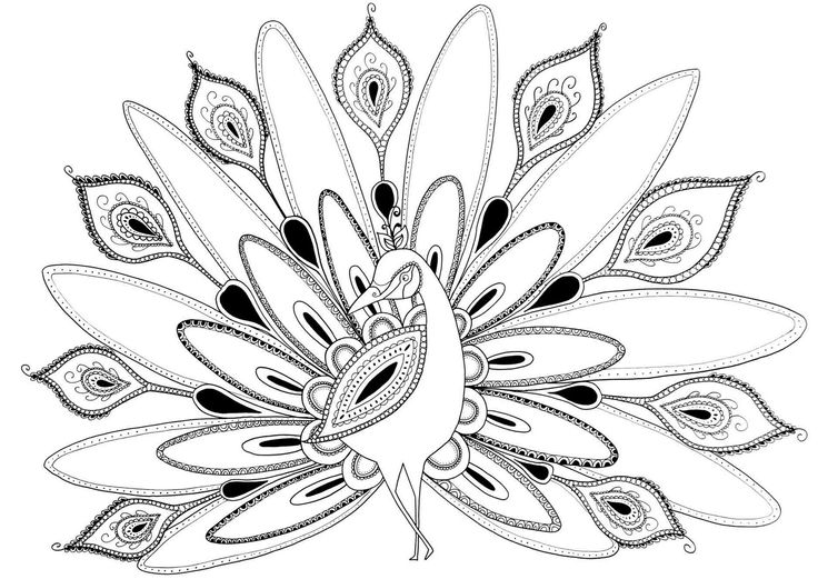 Line Drawing Of Peacock : Best draw more images on pinterest peacock drawing
