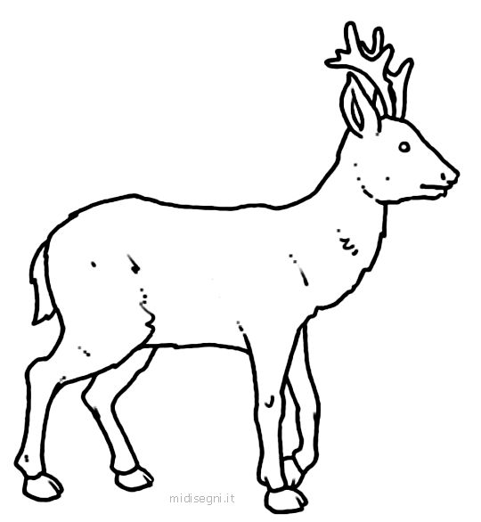 17 migliori idee su disegni da colorare con animali su - Animali immagini da colorare pagine da colorare ...