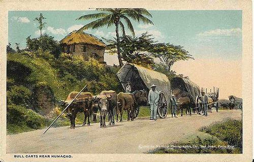 Bull carts near Humacao 1909 by t13hman, via Flickr