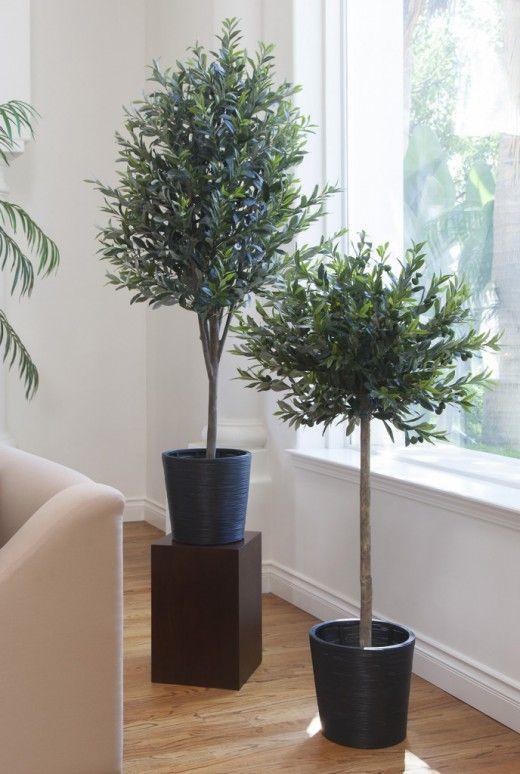 Трудности зимовки оливковых деревьев. Оливковые деревья в регионах с суровыми зимами можно вырастить в саду только в качестве кадочного. Красивая крона и изящный силуэт, удивительная атмосферность этих растений мгновенно преображают окружающее пространство, создавая действительно средиземноморский колорит. Несмотря на статус экзота, это выносливые и неприхотливые растения, сложности с выращиванием которых возникнут лишь во время зимовки. Фото: © save-on-crafts