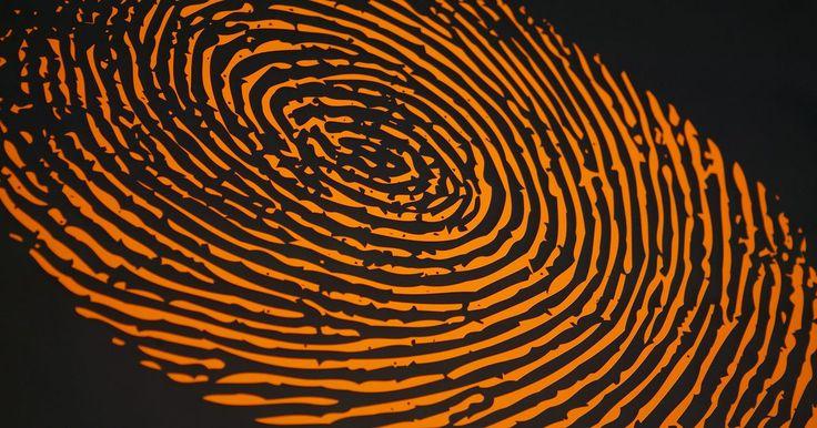 Por qué son diferentes las huellas digitales. Una huella digital se forma a partir de las crestas de fricción sobre la superficie de la piel. Estas crestas de fricción son áreas elevadas en la epidermis que se encuentran en la punta de los dedos, los pies y las palmas de las manos. Las impresiones de huellas dactilares se producen cuando la punta del dedo entra en contacto con una sustancia ...