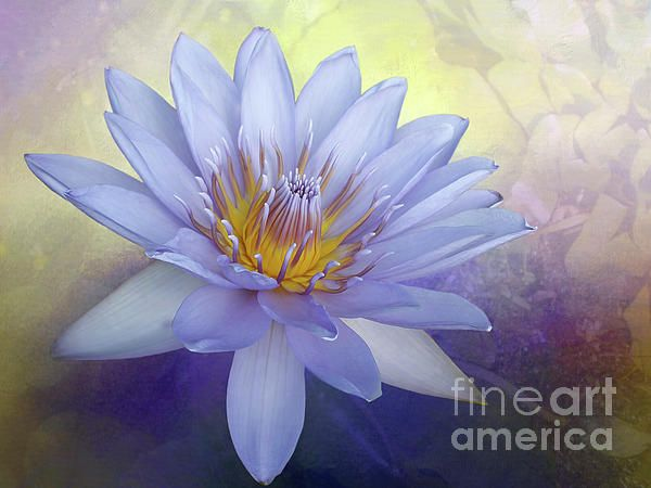 A beautiful blue / lavender colored waterlily on a #textured #bokeh.  #Beauty of a #Waterlily by #Kaye_Menner #Photography Quality Prints Cards Products with a Money Back guarantee at: https://kaye-menner.pixels.com/featured/beauty-of-a-waterlily-by-kaye-menner-kaye-menner.html