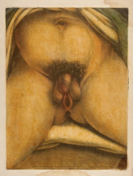 human vulva photographs