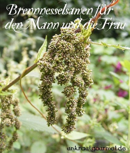 Unkrautgourmet - Wildkräuter und Wildpflanzen essen: Besseres Liebesleben mit Kräutern? Größere Libido dank Brennnesselsamen!