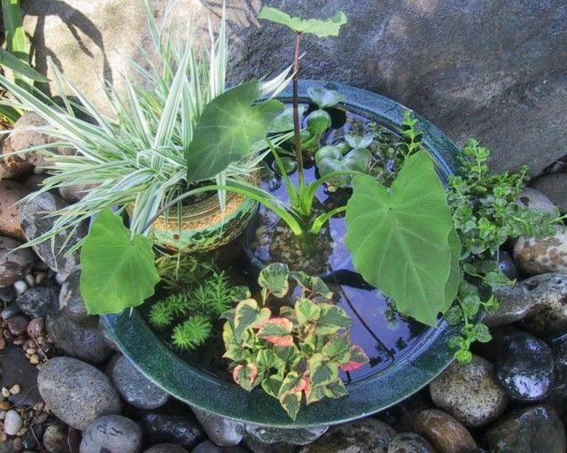 Мобильный мини-пруд с растениями