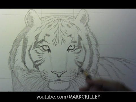 Line Drawing Of Sheep Face : Best tigers drawing and painting images