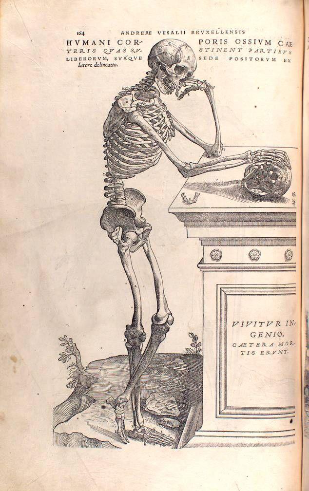 Andreas Vesalius - De Humani Corporis Fabrica, 1543