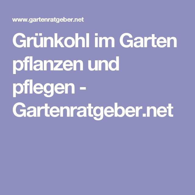 Grünkohl im Garten pflanzen und pflegen - Gartenratgeber.net