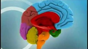 Maqueta del Cerebro - YouTube