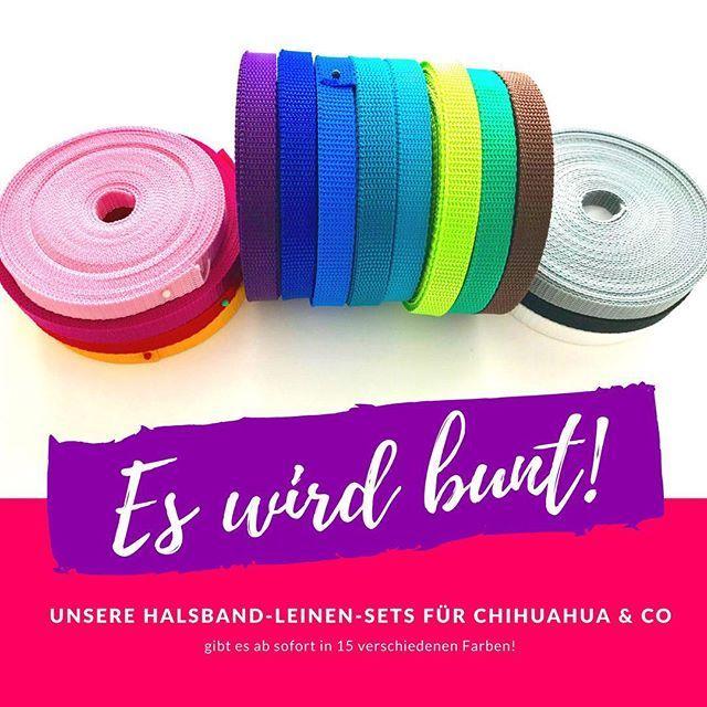 Es wird bunt! Unsere Halsband-Leinen-Sets könnt ihr nun auch in WeißSchwarzGrauZartrosaGelbBlauHellblauTürkisApfelgrünGrün und Braun bestellen! Die neuen Farben werden nach und nach in den Shop einziehen. Sollte die gewünschte Farbe noch nicht online sein einfach in der Bestellnotiz die gewünschte Farbe angeben. #hund #hunde #hundehalsband #hundehalsbänder #dogcollar #chihuahua #zwergspitz #zwergpudel #hundewelpe #welpen #dogpuppy #fb #doguna