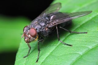 How to Get Rid of Flies in the Yard With a Homemade Fly Trap | eHow