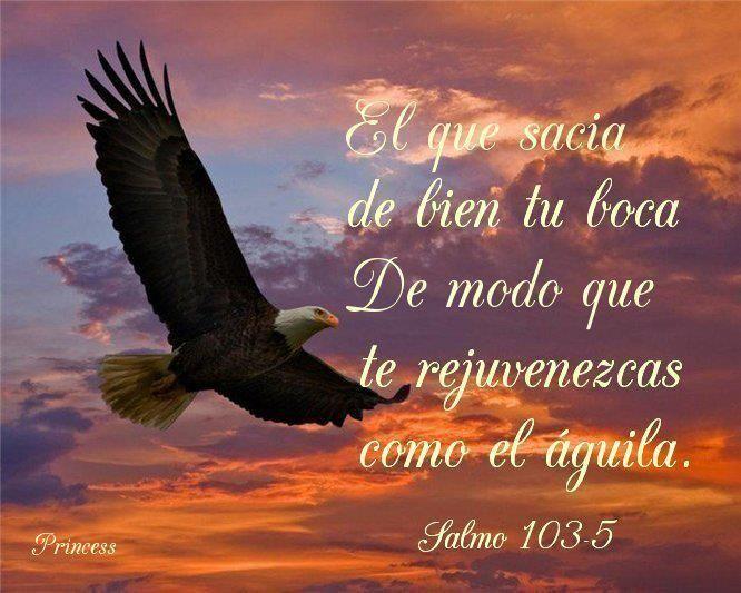 Salmos 103:3-5 El es quien perdona todas tus iniquidades, El que sana todas tus dolencias; El que rescata del hoyo tu vida, el que te corona de favores y misericordias; El que sacia de bien tu boca De modo que te rejuvenezcas como el águila.♔