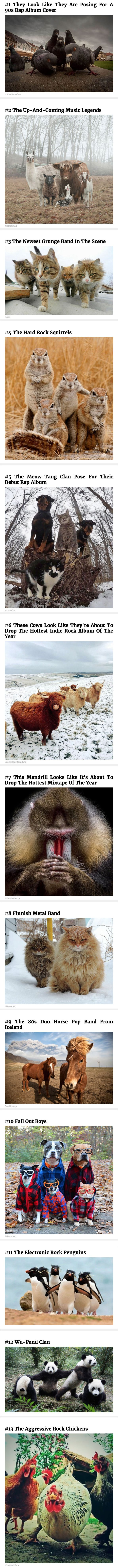 Animals That Look Like They're About To Drop The Hottest Albums Of The Year.