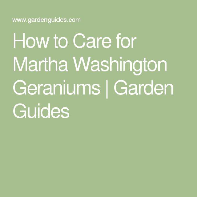 Martha Washington Geraniums Care: 25+ Best Ideas About Geranium Care On Pinterest