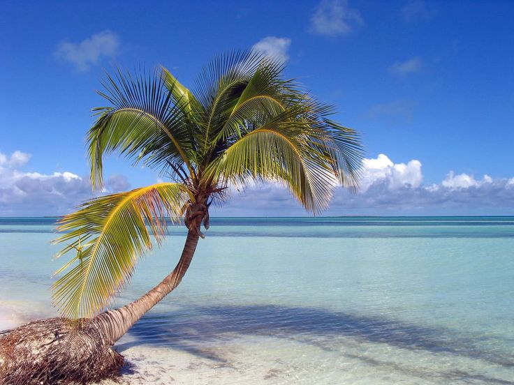Cayo Coco Beach... i want to go to every beach in Cuba, but this one in particular