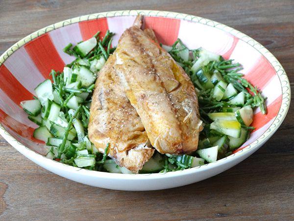 Zeekraal, komkommer, makreel salade