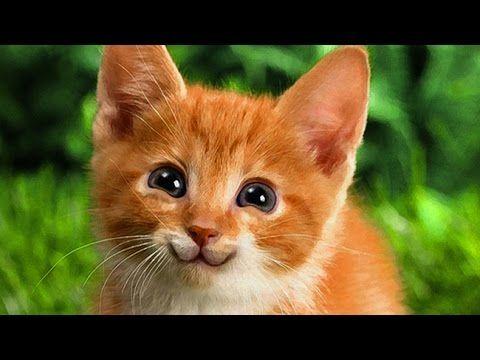 Membuat Kucing Senyum Tutorial Photoshop Unik    Bro and Sis .. :)) don't worry everything will be just fine!! ((: ha ha.. Cara membuat kucing (cat) tersenyum manis dengan menggunakan #photoshop    #editfoto #belajarPhotoshop #fotoEdit