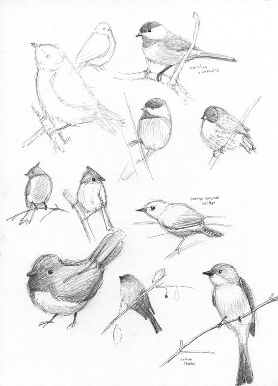 Easy flying birds drawing