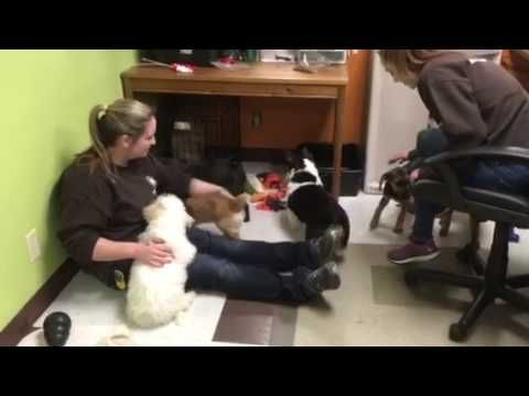 Metro Dogs Daycare & Boarding Puppies Getting Ready for Nap Time 612-333...