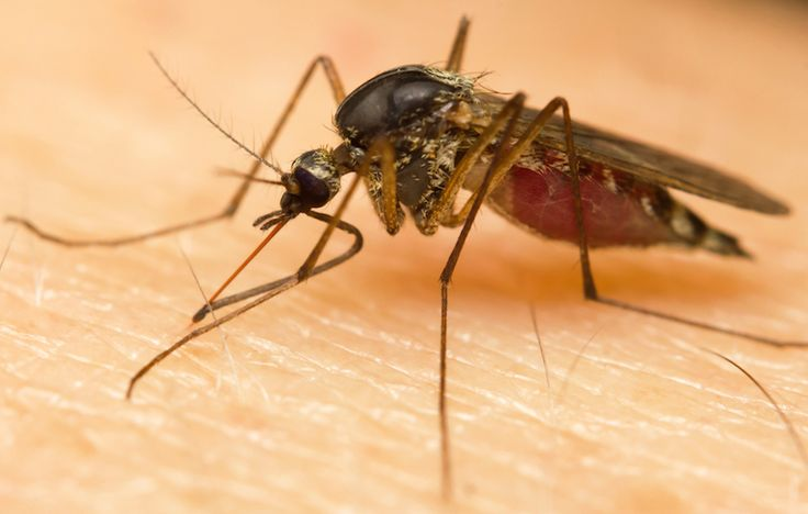 8 Ways to Prevent Mosquito Bites That Actually Work…