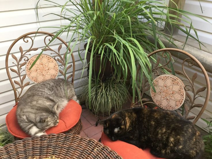 A cat-safe garden of non-toxic plants your cats will love ...