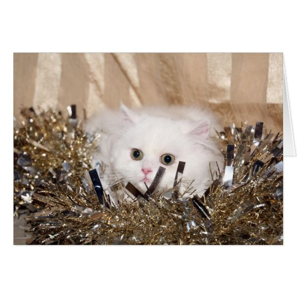 White Persian cat Christmas Card #cards #christmascard #holiday