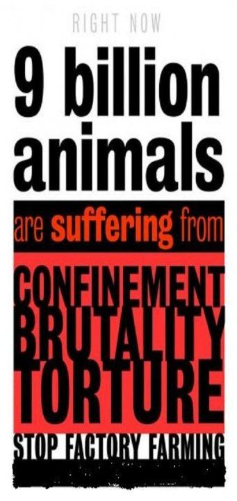 Right now 9 billion animals are suffering from confinement, brutality and torture - Stop factory farming
