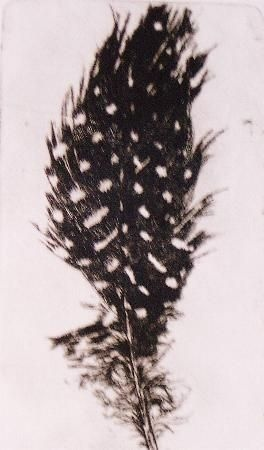 guinea fowl feather,etching