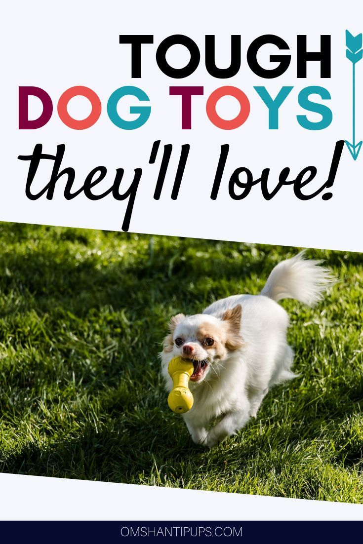 Everyone Loves A Good Play Session With Some Cool Toys However