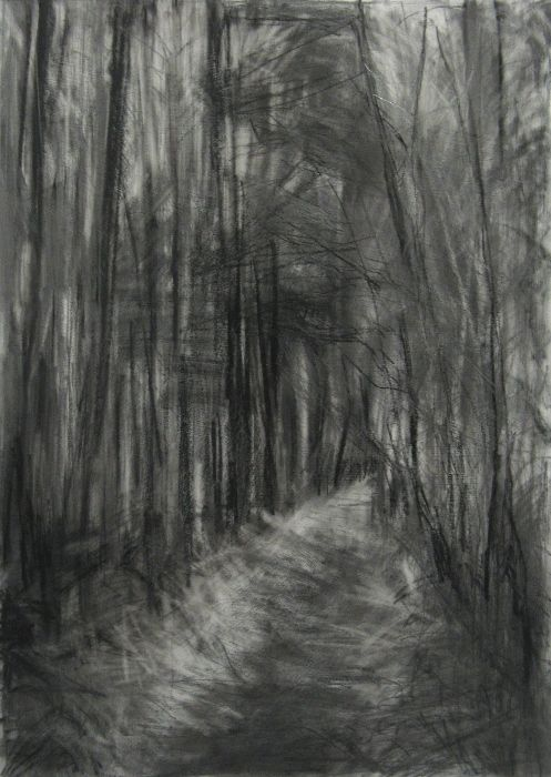 'Silpho Forest III', Janine Baldwin, graphite and charcoal on paper, 67 x 48cm  www.janinebaldwin.com