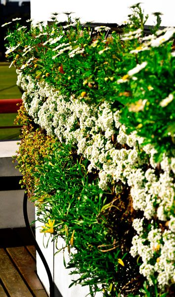 17 best images about jardines verticales on pinterest for Jardines verticales alicante