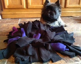 This site is the home of Tarahill Cairn Terriers and Wags to Wishes K9 Training.