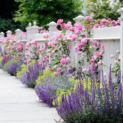 The Garden Fence - now this is my idea of a 'white picket fence' around my house!