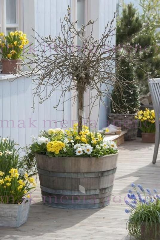 17 Migliori Idee Su Balkonpflanzen Winter Su Pinterest | Piante Di ... Zimmer Und Balkonpflanzen Winter Tipps
