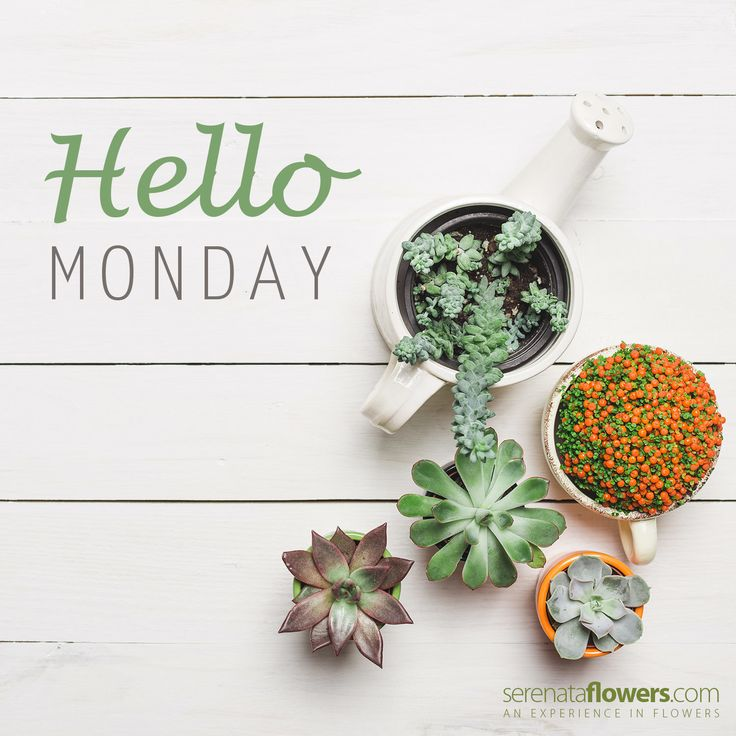 """""""Do what you love and you will never have a problem with Monday."""""""