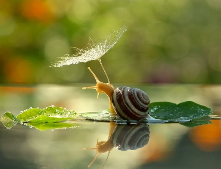 Snails aren't slow. They're just taking the time to appreciate life.