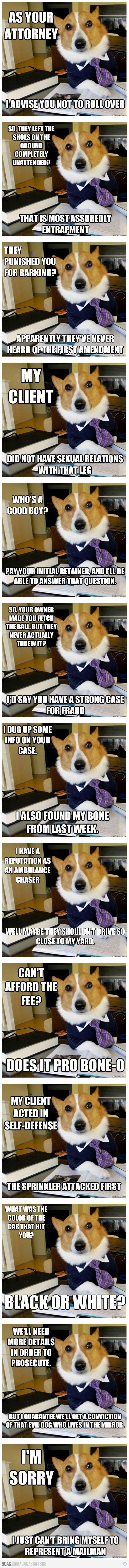 Lawyer corgi is the best.