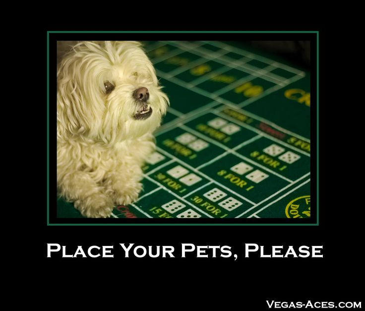I'll take $50 odds that she'll try & eat the dice! BTW… Thanks, Jinn, for the inspiration! #Dogs #Craps