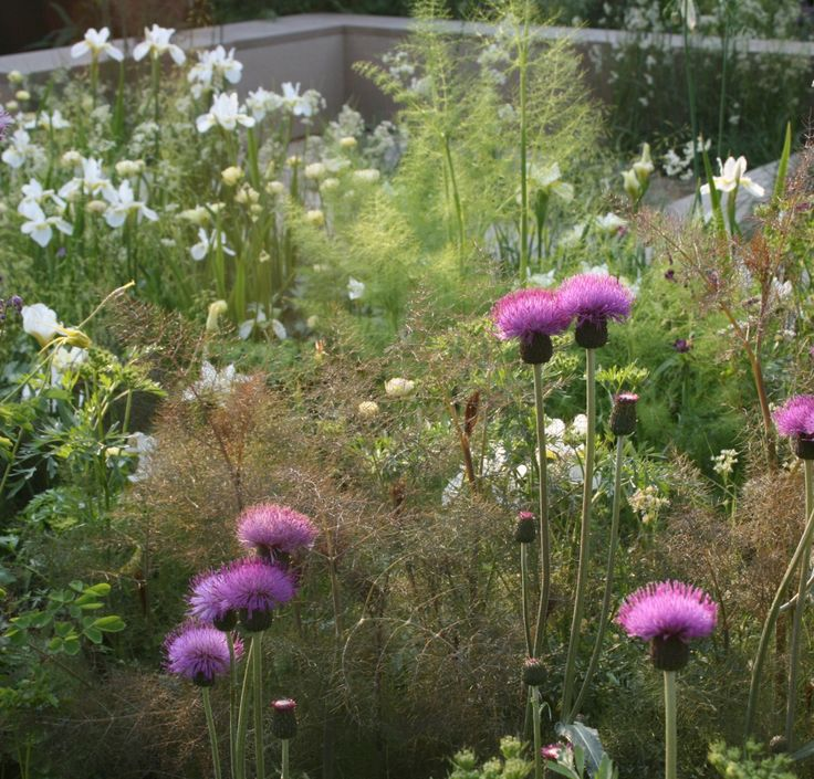 RHS Chelsea 2008 - Sarah Price - Love the bronze fennel together with the vibrant pink.