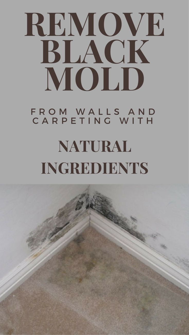 Diy black mold removal - Remove Black Mold From Walls And Carpeting With Natural Ingredients