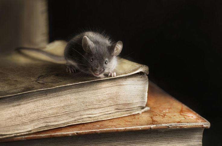 devorador de libros  2 - null