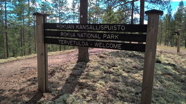 Sienestä Rokualla tapahtuma syyskuussa 2016. Sieniretki asiantuntijan opastuksella ja sieniruokakurssi. Ympäristönä kaunis Rokuan luonto ja sienimetsä täynnä jäkälää. Sienestys Rokua, Pohjois-Pohjanmaa, Suomi.
