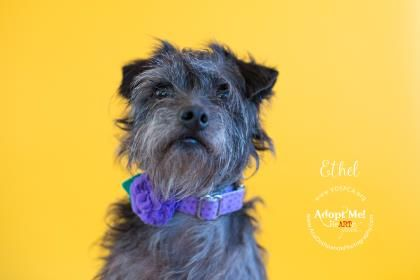 Ethel - URGENT - Valley Oak SPCA in VISALIA, CA - ADOPT OR FOSTER - 2 year old Female Terrier Mix