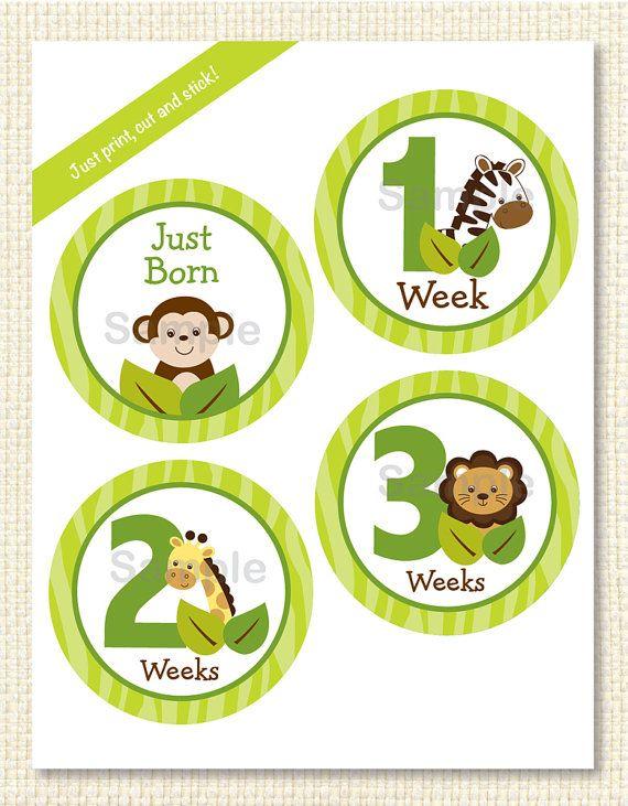 Cute Jungle Animal Monthly Milestone Stickers / Safari ...