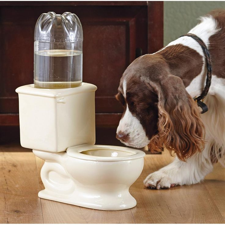 Is your #dog known to drink from the wrong bowl?  How funny is this?: Drinks Bowls, Discount Boots, Automat Pet, Dogs Care, Dogs Lovers, Dogs Rules, Hunt'S Gears, Hunt'S Boots, Pet Drinks